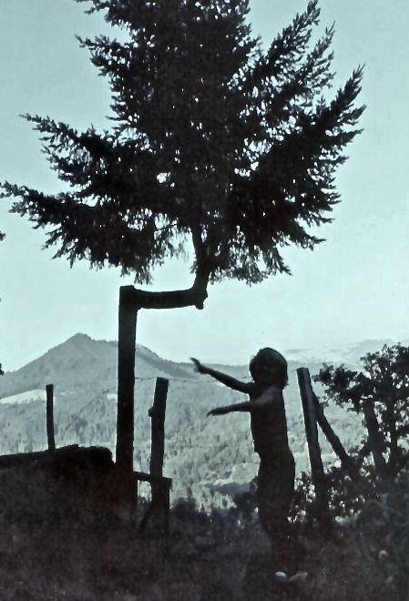 Utah n tree iph
